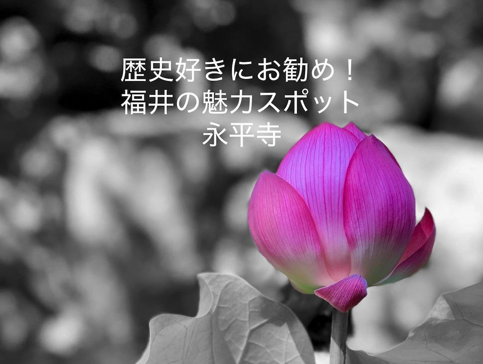 歴史好きにお勧め!福井の魅力スポット。永平寺