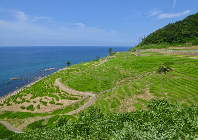 白米千枚田は、里山の濃い緑が、田んぼの明るい緑になり、青い海へと落ちていく