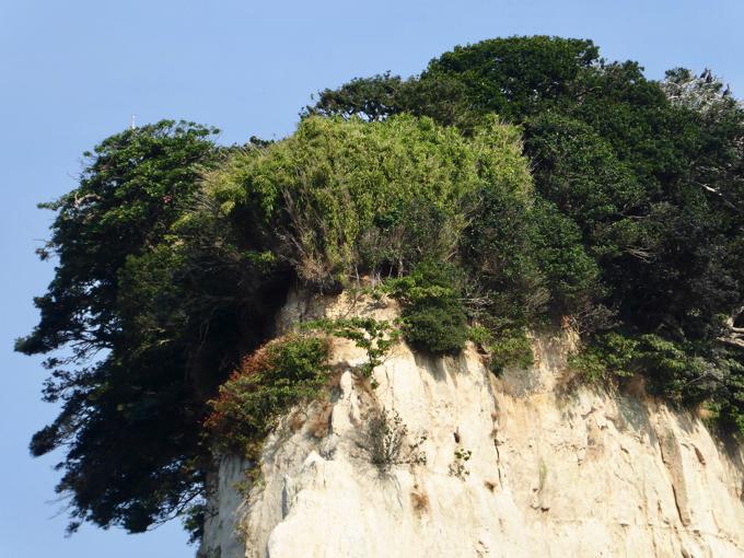 見附島は頂上部だけに木々が生えています