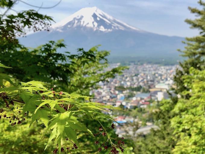 新倉山浅間公園の階段を下りながら新緑の紅葉が目に入る